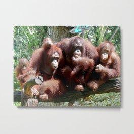 Orangutan Family Metal Print
