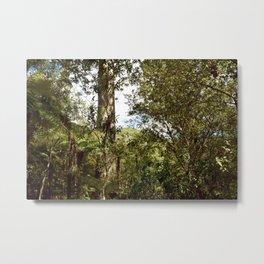 Kauri Tree Reserve in Coromandel Metal Print