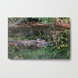 Turtles on a Rock Metal Print