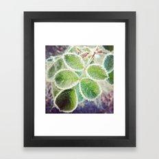 Frosty Rose Framed Art Print