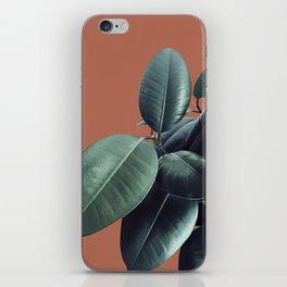 Ficus Elastica #17 #AutumnLeaf #foliage #decor #art #society6 iPhone Skin