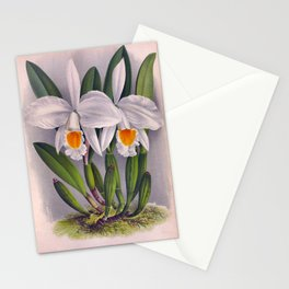 Vintage White Orchids Cattleya Virginalis Lindenia Collection Stationery Cards