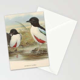 John Gould - A Monograph of the Pittidae (1880) - Pitta maxima / Ivory-breasted pitta Stationery Cards