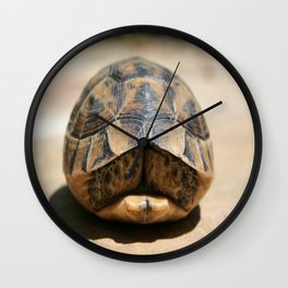 Land Turtle Hiding In Its Shell  Wall Clock