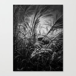 Sun Drenched Canvas Print