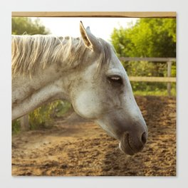 Smoked drunk horse Canvas Print