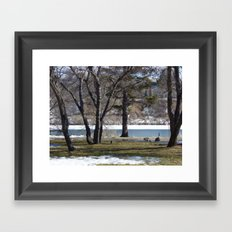 Canadian Geese Framed Art Print