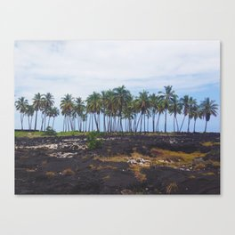 Line Of Palm Trees Along The Shore And Lava Rock Canvas Print