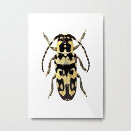 Longicorn Beetle Metal Print