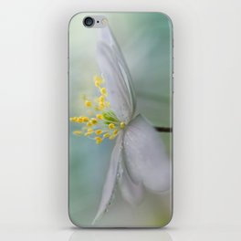 Gorgeous Wood Anemone... iPhone Skin