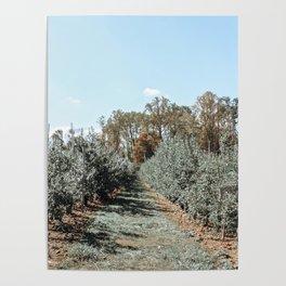 Apple Fields Poster