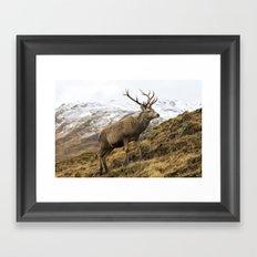 Royal Red Deer Stag in Winter Framed Art Print