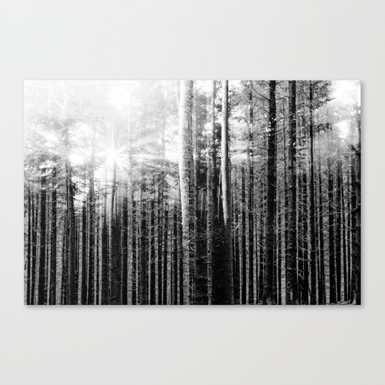 Forest V Canvas Print