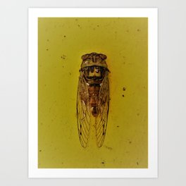 Cicada on Gold Art Print