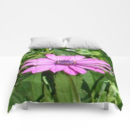 Purple Osteospermum Against Green Leaves Comforters