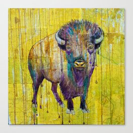 Colorado Buffalo Canvas Print
