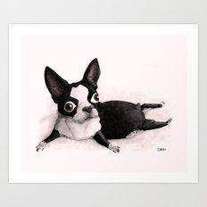 The Little Fat Boston Terrier Art Print