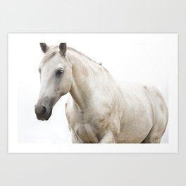 White Horse Photograph Art Print