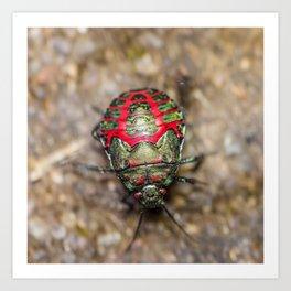 unusal beetle with red markings Art Print