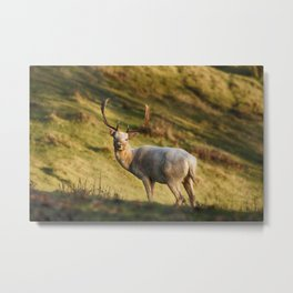 The White Hart Metal Print