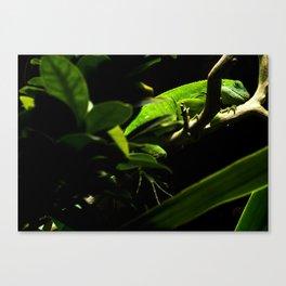 Dragonia Canvas Print