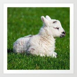 A Sleepy Newborn Lamb In A Field Art Print