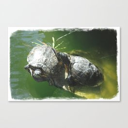 Turtle Love Canvas Print