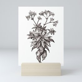 Mandragora Officinalis Mini Art Print