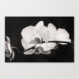 Orchid Classic Canvas Print