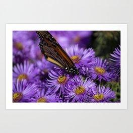 Monarch Butterfly 4 Art Print