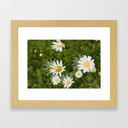 Daisies in a Blur Framed Art Print