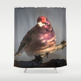 March Purple Finch Shower Curtain