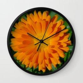 Orange Marigold Close Up With Garden Background  Wall Clock