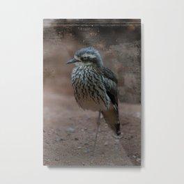 Bush Stone-Curlew Metal Print