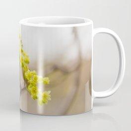 Spring Trees - Nature Photography Coffee Mug