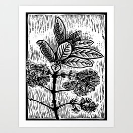Pygmy Fringe Tree Art Print