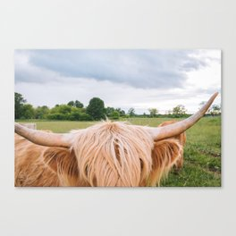 Highland Cow - Longhorns Canvas Print