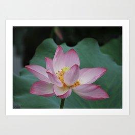 Hangzhou Lotus Art Print