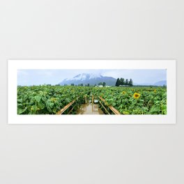 Sunflower Meets Mountain Art Print