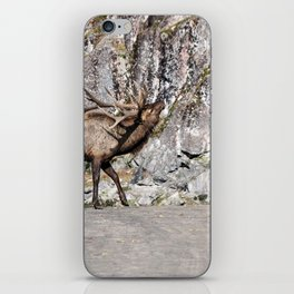 Wapiti Bugling (Bull Elk) iPhone Skin