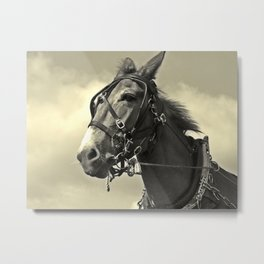 A Horse Of Course - Or Is It A Mule? Metal Print