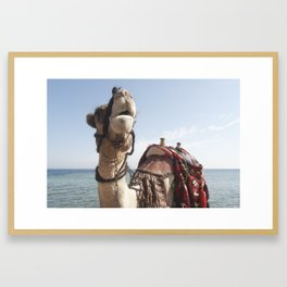 Red Sea Camel Framed Art Print
