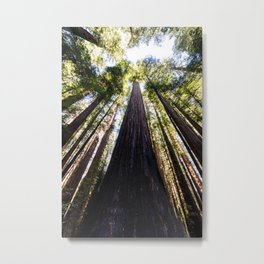 The Great Altar of the Church of the Redwood Forest Metal Print