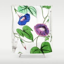 A Purging Pharbitis Vine in full blue and purple bloom - Vintage illsutration Shower Curtain