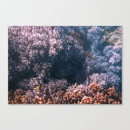 Soft Corals, Great Barrier Reef Canvas Print