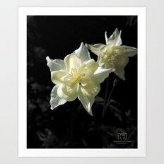White Columbine Art Print