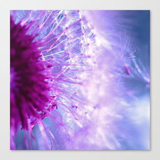 purple dandelion II Canvas Print