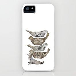 Seals of La Jolla iPhone Case