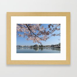 cherry blossoms jefferson memorial Framed Art Print