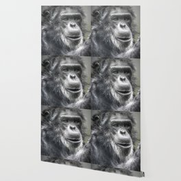 Chimpanzee Wallpaper